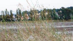 Het gras Stock Foto's