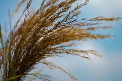 Het gras is achtergrondhemel Royalty-vrije Stock Afbeelding