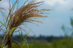 Het gras is achtergrondhemel Royalty-vrije Stock Foto's