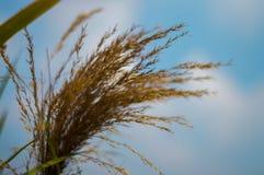 Het gras is achtergrondhemel Stock Afbeelding