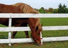 Het gras is altijd groener Royalty-vrije Stock Foto's