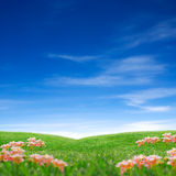 Het gras & de hemel van de lente Stock Foto's