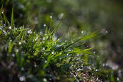 Het gras in de dauw Na de regen stock afbeelding