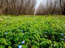 Het gras in de lente is volledig van vitaliteit royalty-vrije stock afbeelding