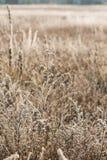 Het gras dichte omhooggaand van de vorst Stock Afbeeldingen