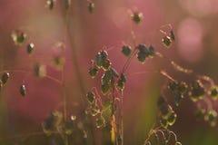 Het gras door warme zonovergoten op een de zomerweide wordt aangestoken, vat natuurlijke achtergronden voor uw ontwerp dat samen  Royalty-vrije Stock Afbeeldingen