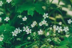 Het gras is een kruid Stock Fotografie