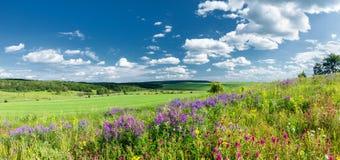 Het gras en de bloemen van juni royalty-vrije stock foto