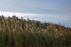 Het gras en de hemel komen samen royalty-vrije stock afbeeldingen