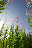 Het gras en de hemelmening van de zomer van neer Royalty-vrije Stock Afbeelding