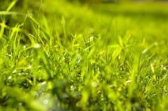 Het gras glinstert in de zon Royalty-vrije Stock Afbeeldingen