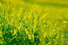 Het gras glinstert in de zon Royalty-vrije Stock Foto's