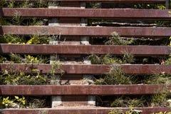 Het gras groeit door een roestige metaalladder Royalty-vrije Stock Afbeelding