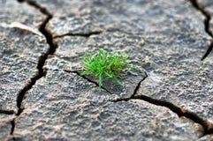 Het gras groeit in droge grond Stock Afbeeldingen