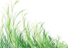 Het gras is Groener Royalty-vrije Stock Foto