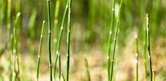 Het gras in het bos Royalty-vrije Stock Foto's
