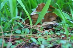 Het gras in het bos Stock Afbeeldingen