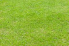 Het gras in het gazon Stock Afbeeldingen
