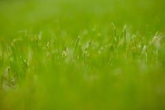 Het gras in het gazon Stock Afbeelding