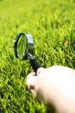 Het gras inspecteert stock foto