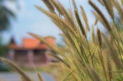 Het gras langs de kant van de weg Stock Fotografie