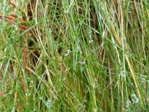 Het gras Macro Stock Foto