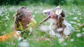 In het gras, in madeliefjes, in een weide, twee blonde, aardige meisjes, kinderen die, het babbelen, op het gras liggen Twee Vrie stock videobeelden