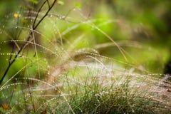 Het gras met dauw daalt dicht omhoog stock foto's
