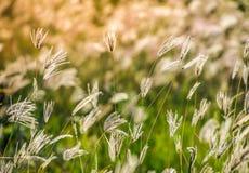 Het gras moet dichtbij verwelken, geblazen door de wind stock foto's