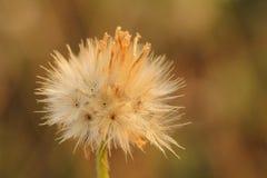 Het gras is mooie bloem Stock Fotografie