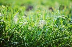 Het gras na de regen Royalty-vrije Stock Afbeeldingen