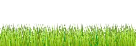 Het gras is op een witte achtergrond. Stock Fotografie