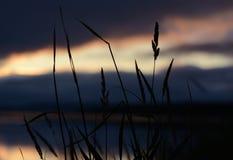 Het gras op een zonsondergang Royalty-vrije Stock Fotografie