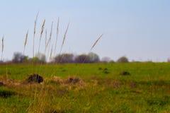 Het gras op het gebied Stock Foto