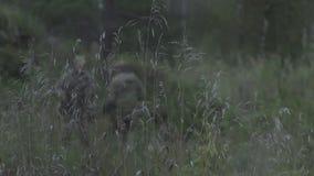 Het gras op het gebied op een achtergrond van oorlog De militairen willen het achtergrondgebied stock video