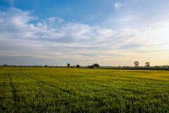 Het gras op het licht Royalty-vrije Stock Fotografie