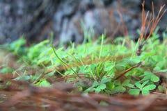 Het gras ter plaatse, Royalty-vrije Stock Afbeeldingen