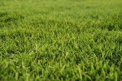 Het gras van de Bermudas Royalty-vrije Stock Afbeelding