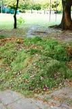 Het gras van de besnoeiing Royalty-vrije Stock Fotografie