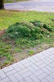 Het gras van de besnoeiing Stock Foto's