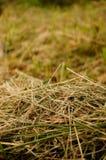 Het gras van de besnoeiing Stock Afbeelding