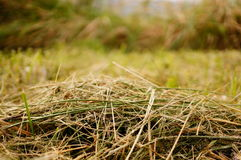 Het gras van de besnoeiing Royalty-vrije Stock Foto