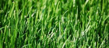 Het Gras van de besnoeiing - Patroon Stock Afbeelding