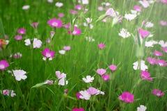 Het gras van de bloem Stock Foto
