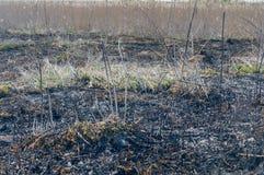 Het gras van de brandwond uit stock fotografie