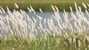 Het gras van de fontein Royalty-vrije Stock Afbeeldingen