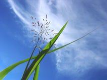 Het gras van de foto, blauwe hemel en wolken Stock Afbeelding