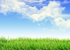 Het gras van de hemel Royalty-vrije Stock Foto's