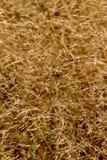 Het gras van de herfst Stock Fotografie