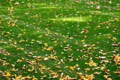 Het gras van de herfst Royalty-vrije Stock Afbeelding